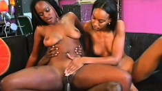 Two caramel beauties take turns wildly bouncing on a huge black prick