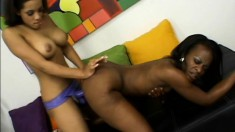Two horny black girls make each other moan and scream with toys